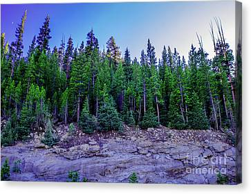 Yosemite Evening Pines Canvas Print by Timothy Kleszczewski