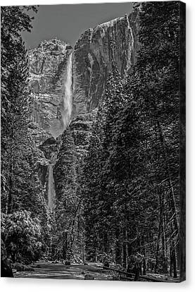 Yosemite Falls In Black And White IIi Canvas Print by Bill Gallagher