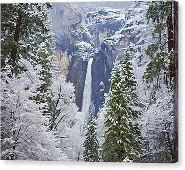 Yosemite Falls In The Snow Canvas Print by Gregory Scott