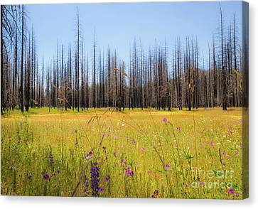 Yosemite Juxtaposition By Michael Tidwell Canvas Print