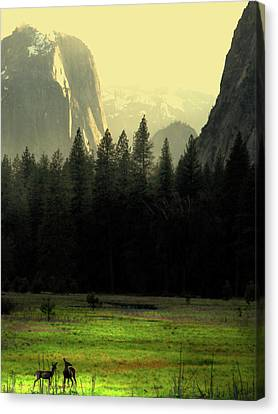 Yosemite Valley Golden . Vertical Canvas Print by Wingsdomain Art and Photography