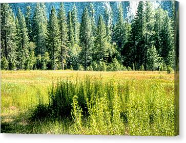 Yosemite Valley2 Canvas Print by Michael Cleere