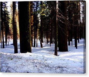 Yosemite Winter Canvas Print by Tim Tanis