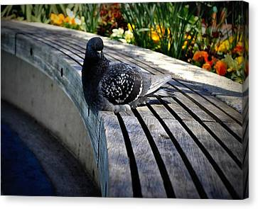 Canvas Print - You Gotta Be Pigeon Me by Brynn Ditsche