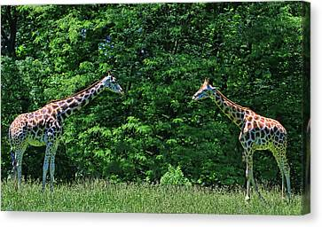 Canvas Print - You Looking At Me  by Allen Beatty