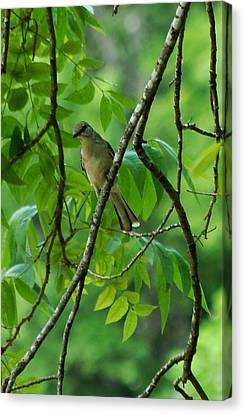 You Looking At Me Canvas Print by David Lane
