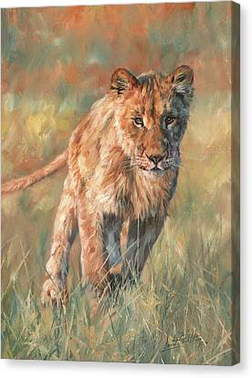 Canvas Print featuring the painting Youn Lion by David Stribbling
