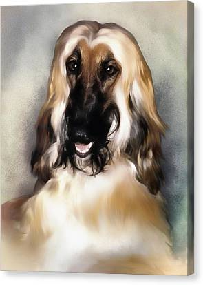 Young Afghan Hound   Portrait Canvas Print