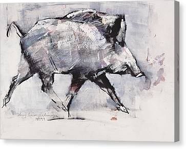 Boars Canvas Print - Young Boar by Mark Adlington
