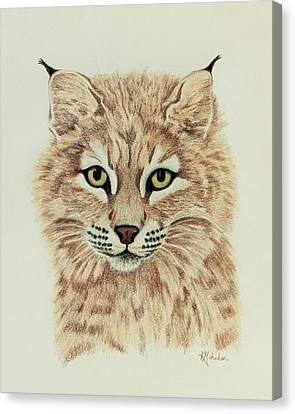 Young Bobcat Canvas Print by Karen Mahnken