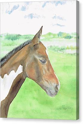 Young Cob Canvas Print