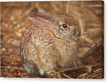 Young Cottontail In The Morning Canvas Print