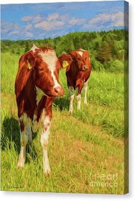 Young Cows Canvas Print by Veikko Suikkanen