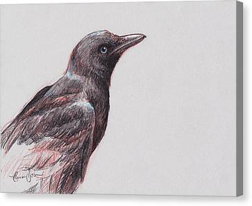 Young Crow 1 Canvas Print