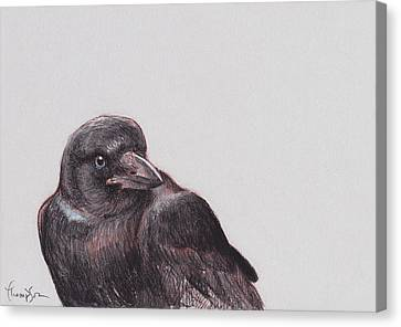Young Crow 2 Canvas Print
