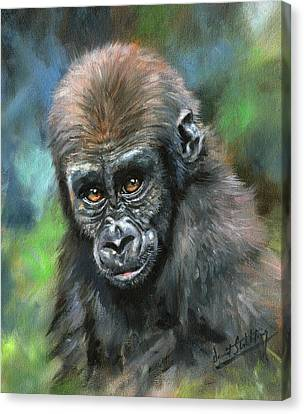 Ape Canvas Print - Young Gorilla by David Stribbling