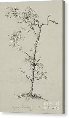 Nature Study Canvas Print - Young Hickory, 1823 by Thomas Cole