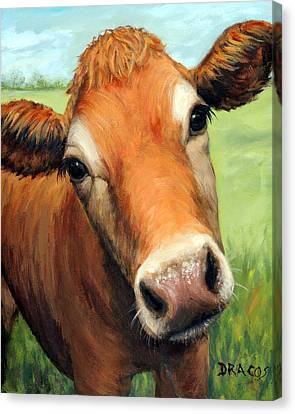 Cow Canvas Print - Young Jersey Cow In Field by Dottie Dracos