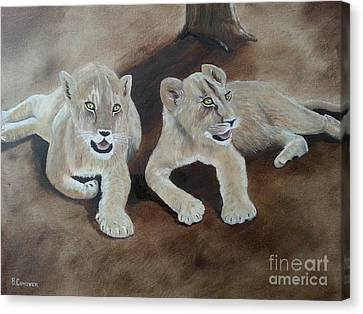 Young Lions Canvas Print by Bev Conover