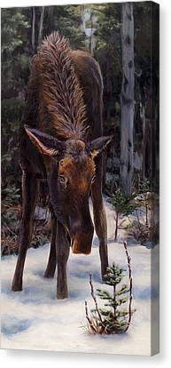 Canvas Print featuring the painting Young Moose And Pussy Willows Springtime In Alaska Wildlife Painting by Karen Whitworth