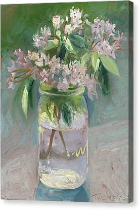 Young Mountain Laurels Canvas Print by Catherine Twomey