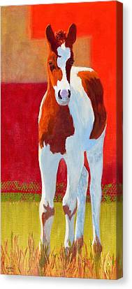 Young Pinto Canvas Print by Nancy Jolley