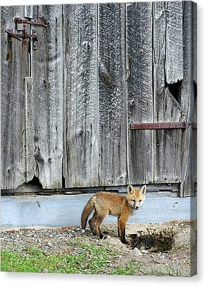Fox Kit Canvas Print - Young Red by Bill Morgenstern