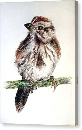 Canvas Print featuring the painting Young Sparrow by Sibby S