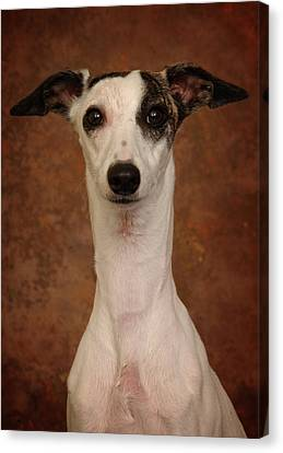 Canvas Print featuring the photograph Young Whippet by Greg Mimbs