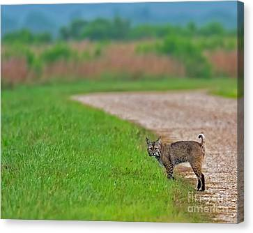 Your Guide For The Day Canvas Print by Gary Holmes