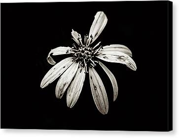 Canvas Print - You're Perfect To Me - Sepia Tint by Scott Pellegrin