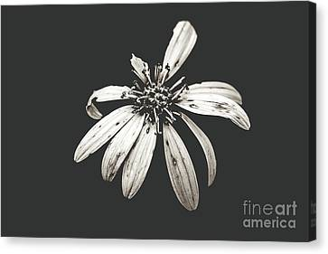 Canvas Print - You're Perfect To Me - With Sheer Haze by Scott Pellegrin
