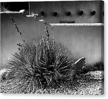 Yucca And Adobe Canvas Print