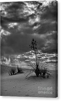 Yucca At Sunset Canvas Print