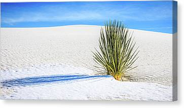 Yucca Canvas Print by Marla Hunt