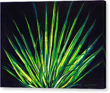 Yucca Canvas Print by Melvin Moon