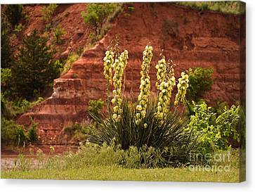 Yucca Plant At Great Salt Plains Lake Oklahoma Canvas Print by Fred Lassmann