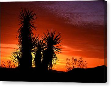 Yucca Sunrise Canvas Print by Eric Foltz