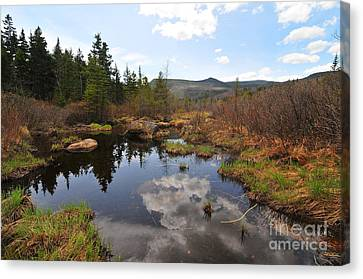 Canvas Print - Zealand River II by Catherine Reusch Daley