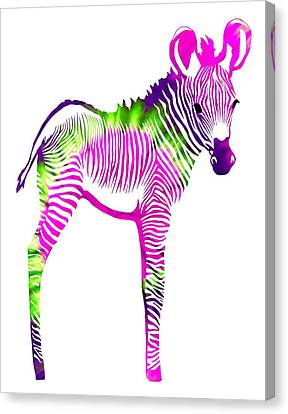 Zebra Canvas Print - Zebra 2 by Cindy Edwards