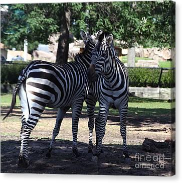 Zebra Buds Canvas Print