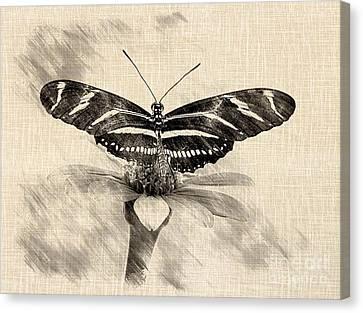 Zebra Butterfly Sketch Canvas Print by Liz Masoner