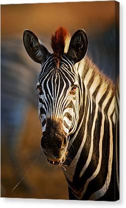 Head And Shoulders Canvas Print - Zebra Close-up Portrait by Johan Swanepoel