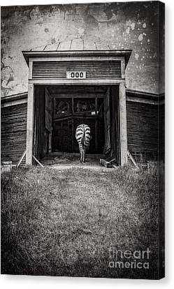 Surreal Barn Canvas Print - Zebra by Edward Fielding