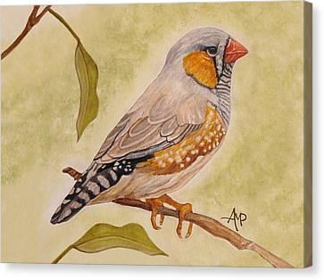 Zebra Finch Watercolor Canvas Print by Angeles M Pomata