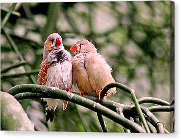 Canvas Print featuring the photograph Zebra Finch Colloquy by Rona Black