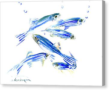 Zebra Fish, Danio Canvas Print by Suren Nersisyan