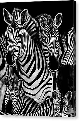 Zebra Group  Canvas Print by Gull G