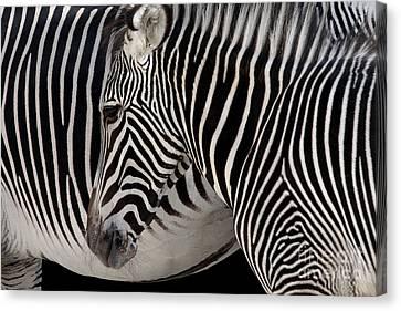 Zebra Head Canvas Print by Carlos Caetano