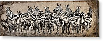 Canvas Print featuring the photograph Zebra Herd Rock Texture Blend Wide by Mike Gaudaur